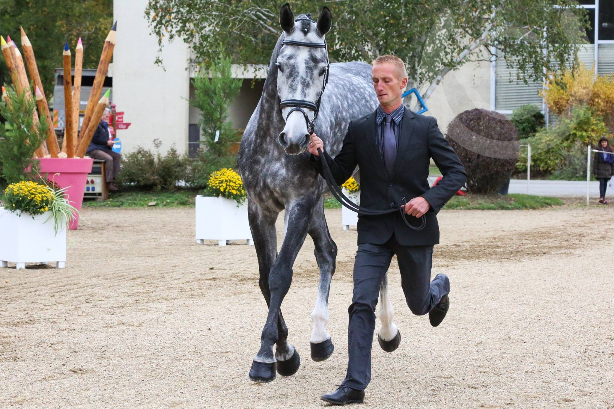 écurie-christopher-six-vanity-fair-cavalier-concours-complet-international-membre-equipe-de-france-pension-box-paddock-valorisation-coaching-gazeran-78 (4)