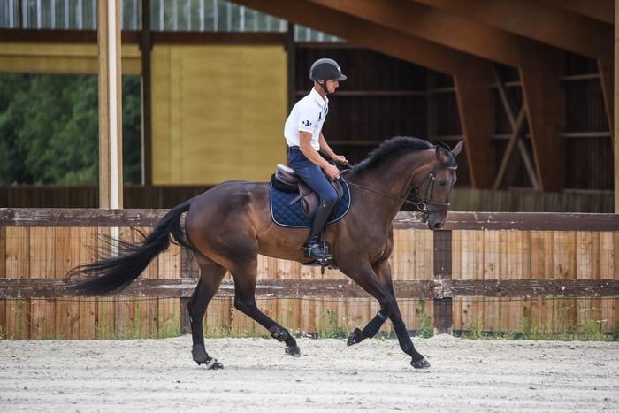 ecurie-de-la-cendriniere-christopher-six-chevaux-Undecover-BHS